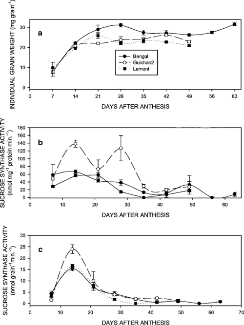 small resolution of individual grain weights and sucrose synthase activities for bengal lemont and guichao2 rice grown