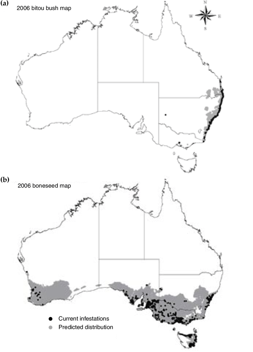 medium resolution of current and potential distribution in australia of a bitou bush and b