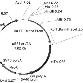 (PDF) Use of the human EF-1?? promoter for expression can