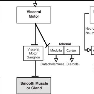 (PDF) Neuroendocrine mechanisms of alternative