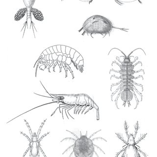 (PDF) Introduction to aquatic macroinvertebrate groups