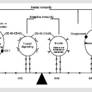 (PDF) Treatment of immune thrombocytopenia with