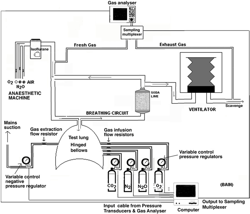 Schematic diagram of the lung gas exchange simulator and