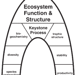 Keystone Arch Diagram Rikki Tikki Tavi Plot Answers Schematic Of The Process Concept In An A Is Central Stone Bearing Lateral And Vertical Stresses Binding