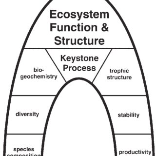 Schematic diagram of the keystone process concept. In an