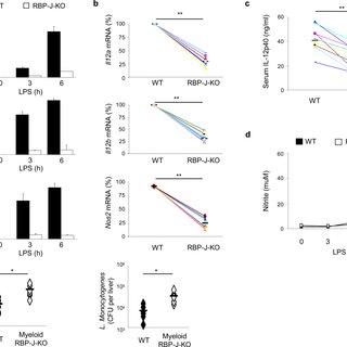 (PDF) Notch-RBP-J Signaling Regulates IRF8 to Promote