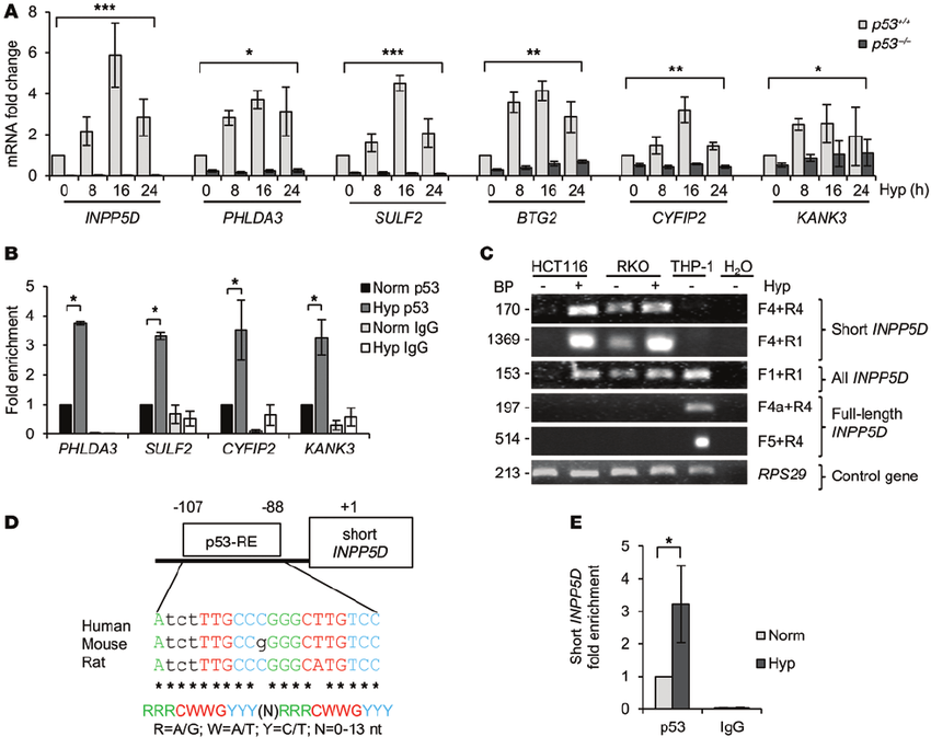 Transcriptional activity of p53 is required to induce