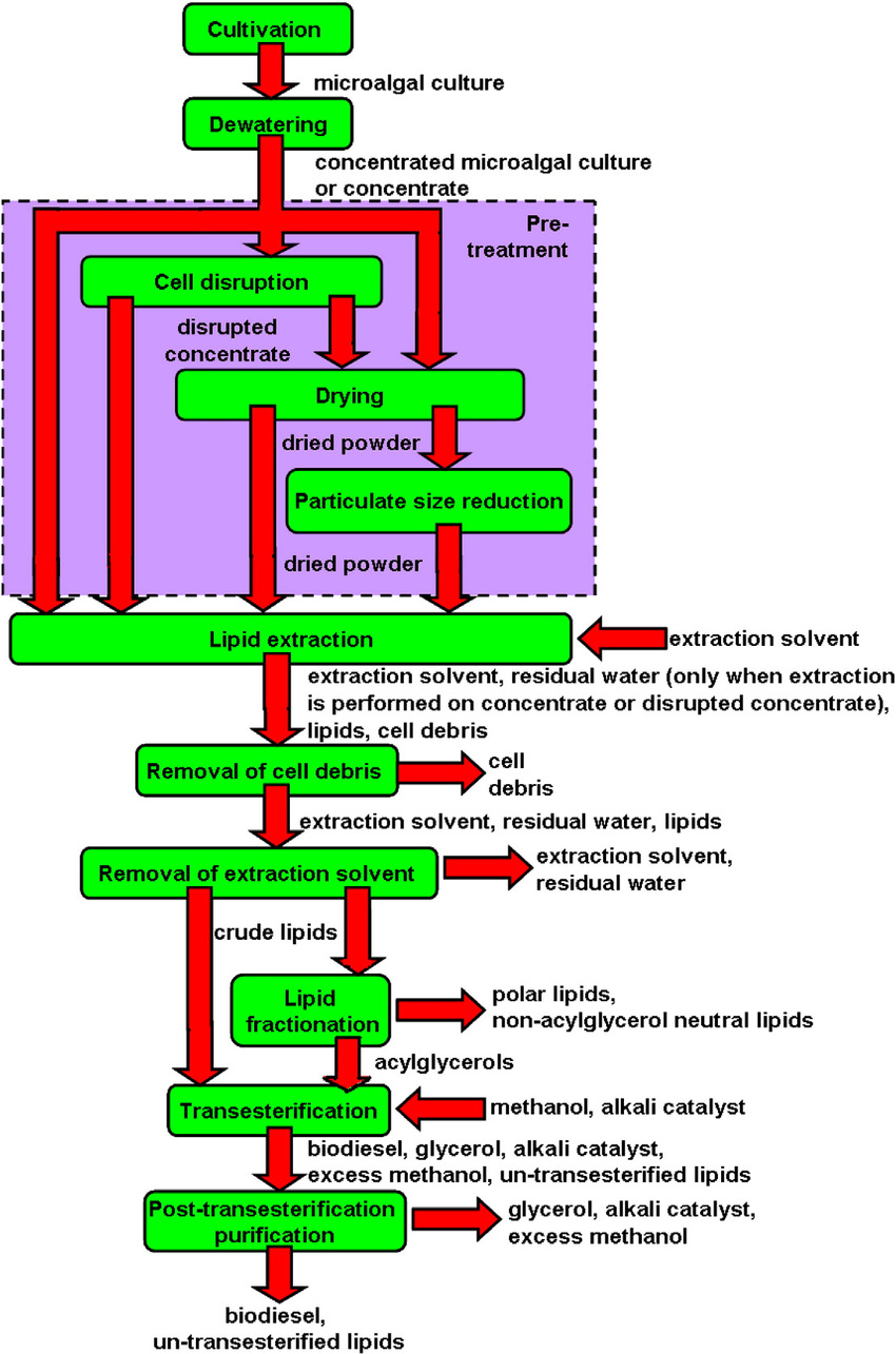 hight resolution of process flow diagram showing the downstream processing steps needed to produce biodiesel from microalgal biomass