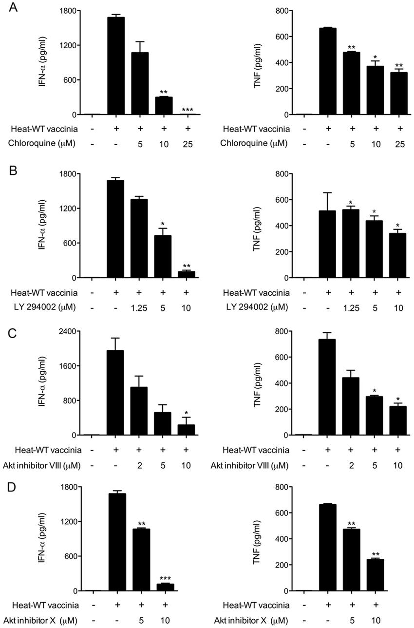 Chloroquine, PI3K and Akt inhibitors block the induction