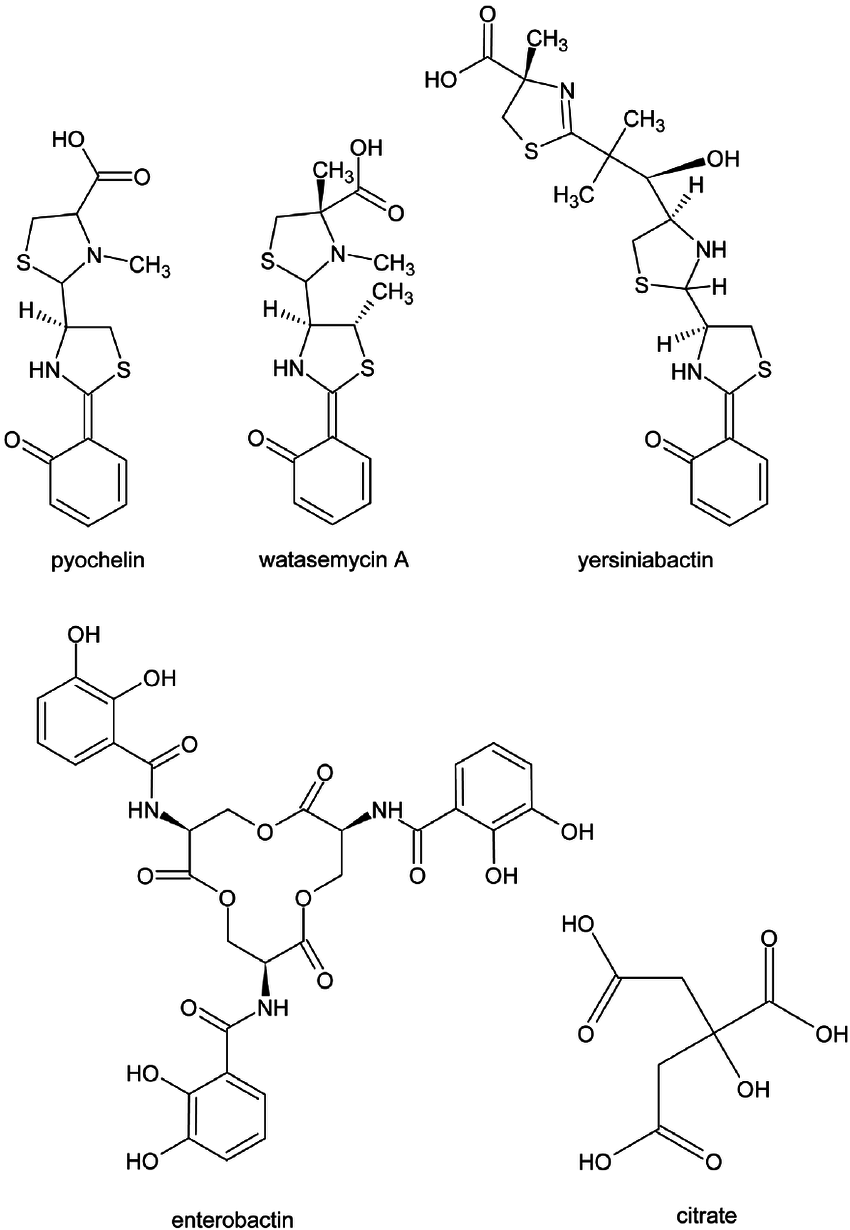 Chemical structures of the siderophores pyochelin