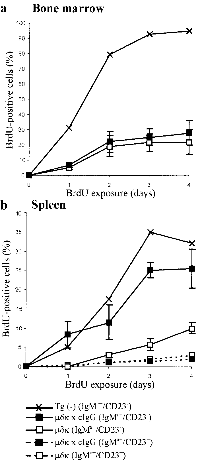 hight resolution of kinetics of brdu labeling of b lymphocytes of naab cigg mice in bone marrow a