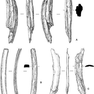 Morphological and structural properties of the mammoth