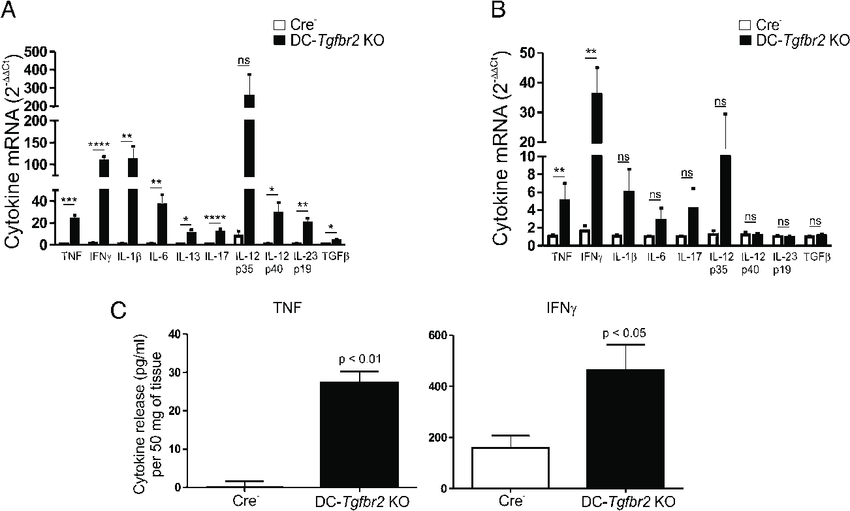 Elevated cytokine expression in DC-Tgfbr2 KO mice. (A and