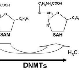Repression of transcription via CpG dinucleotide