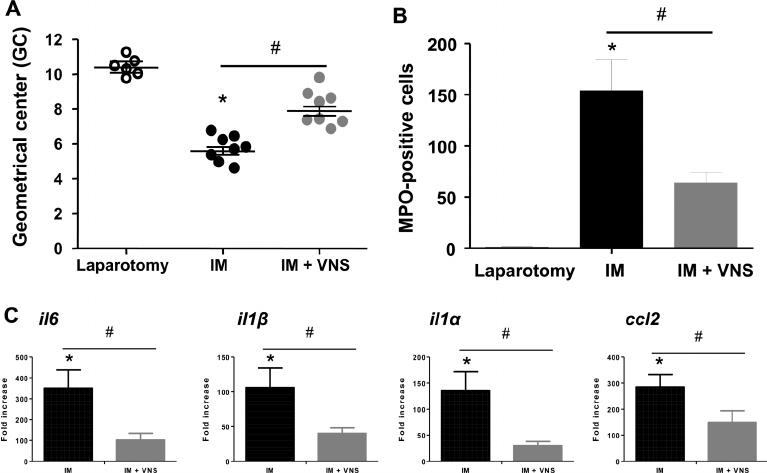 Vagus nerve stimulation (VNS) reduces intestinal in fl