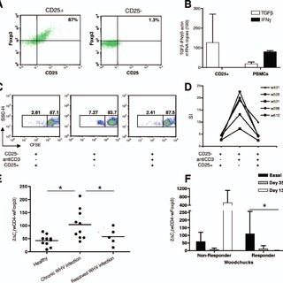 Analysis of woodchuck Treg activity and liver Foxp3