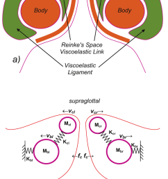 vocal fold 2 mass biomechanical model assumed in g e a stuctural [ 850 x 1335 Pixel ]