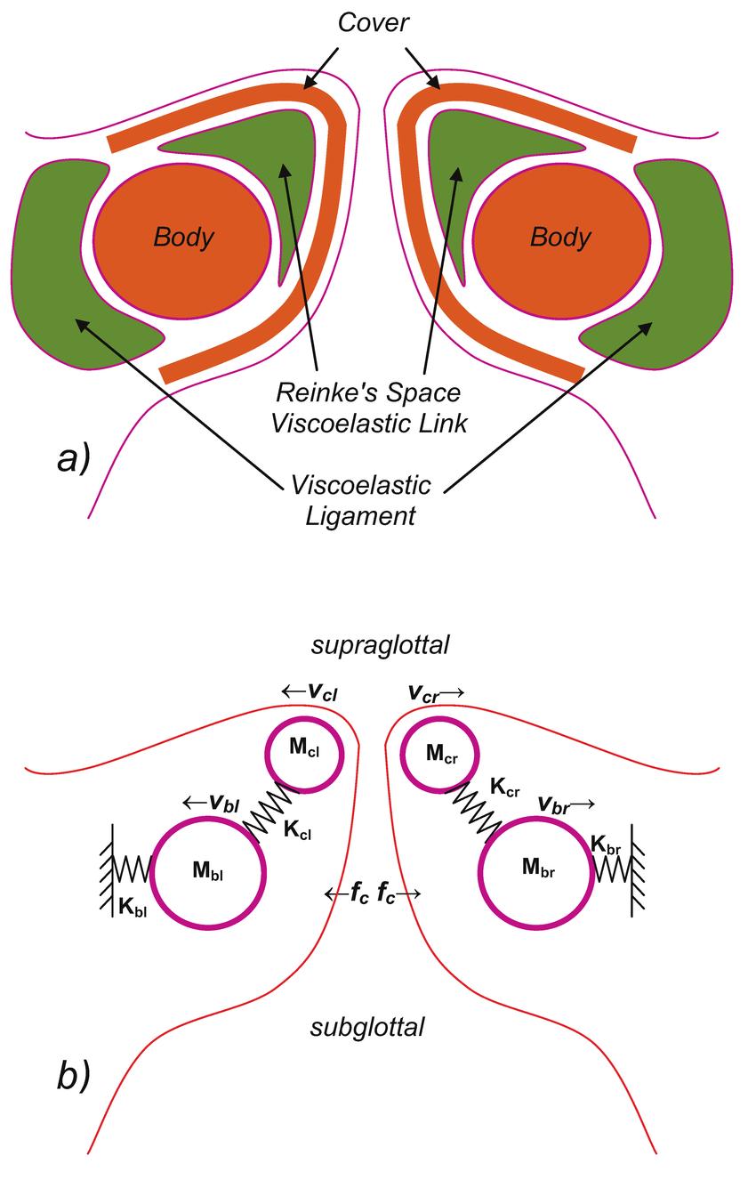 medium resolution of vocal fold 2 mass biomechanical model assumed in g e a stuctural