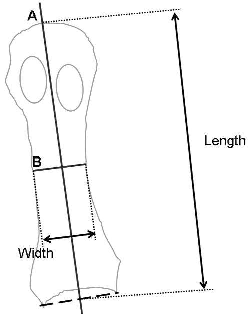 Method of measuring the length and width of the first and