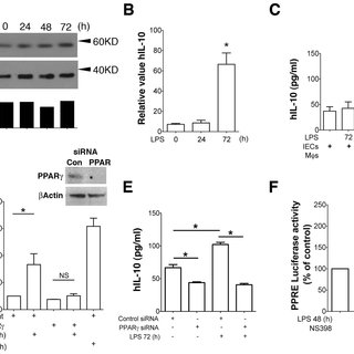 Detection of functional PPRE motif in IL-10 promoter in