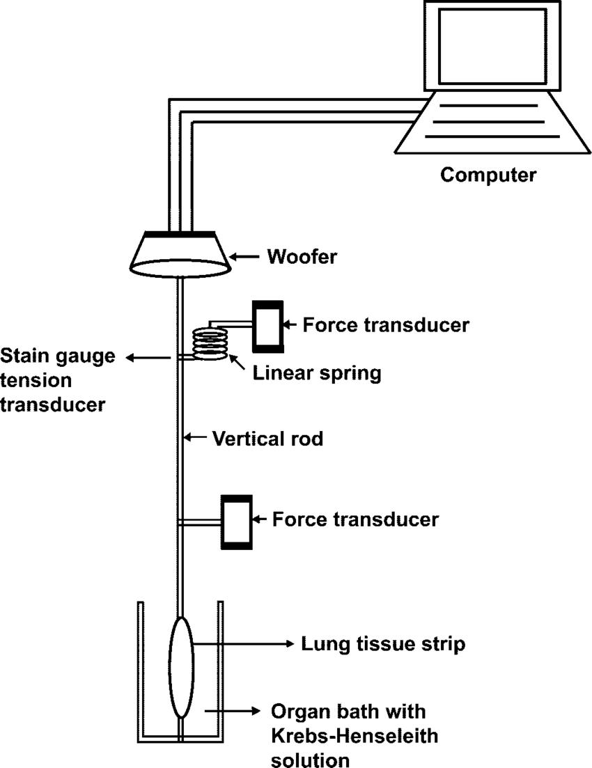 Schematic setup used for tissue mechanics measurements