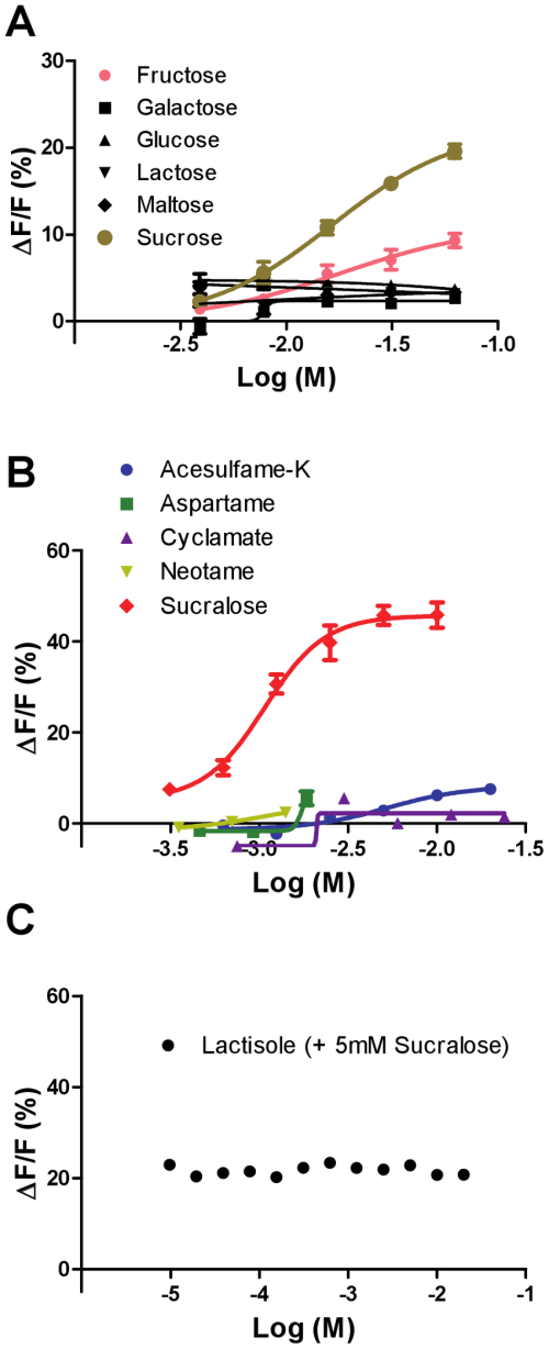 small resolution of responses of the giant panda sweet taste receptor t1r2 t1r3 to sugars and artificial sweeteners