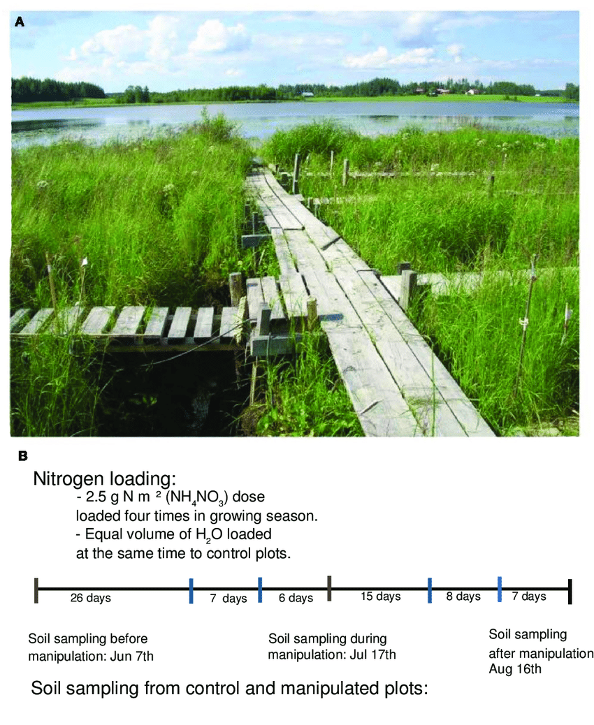 medium resolution of figure a1 a the littoral wetland of lake kev t n in july 2007