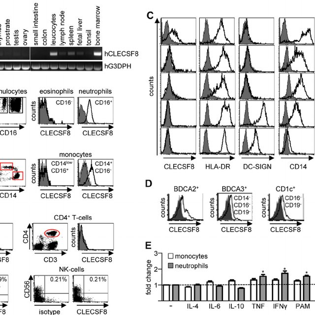DNGR-1 expression on transferred CD8α + spleen DCs is