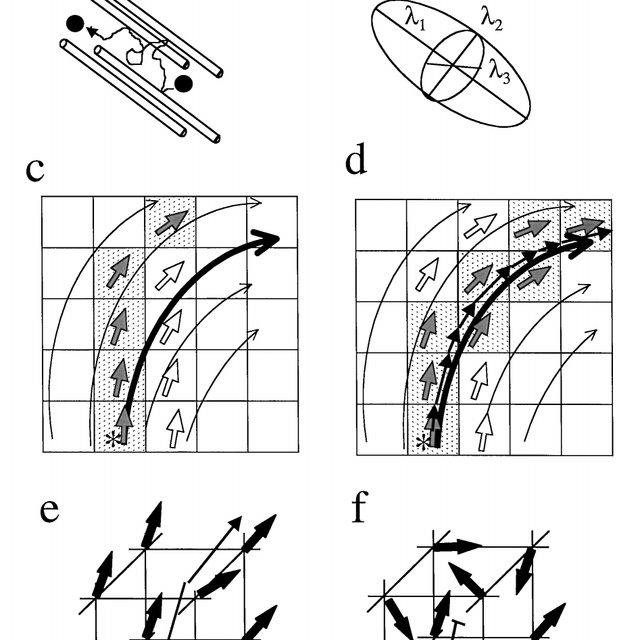 (PDF) Mori S, Crain BJ, Chacko VP, van Zijl PCM. Three