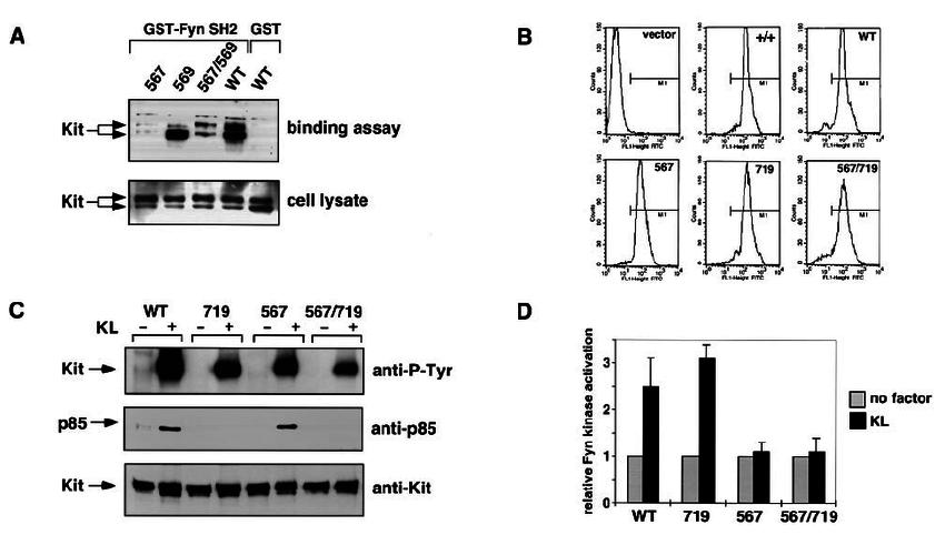 Biochemical characterization of Kit receptor mutants. ( A ) Association... | Download Scientific Diagram