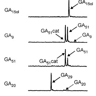 (PDF) Molecular Cloning and Functional Expression of
