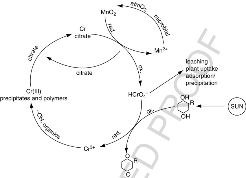 2 A general representation of chromium biogeochemical