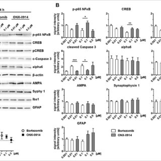 (PDF) Low Neurotoxicity of ONX-0914 Supports the Idea of