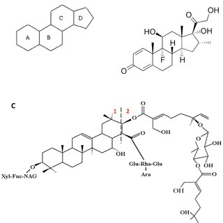 (A) The basic ring structure of a steroid molecule. (B