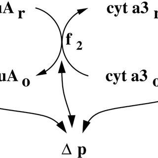 (PDF) A Model of Brain Circulation and Metabolism: NIRS