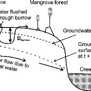 Groundwater flow paths through a mangrove swamp during