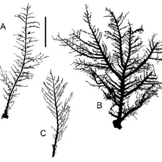 (PDF) Taxonomic revision and systematic notes on some
