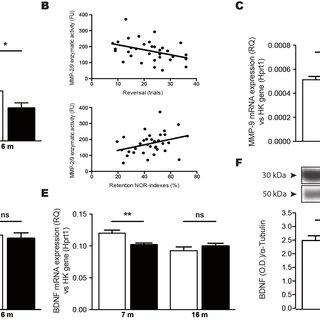 (PDF) High fat diet exacerbates Alzheimer's disease