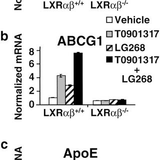 Functional roles of LXR in adipocyte differentiation