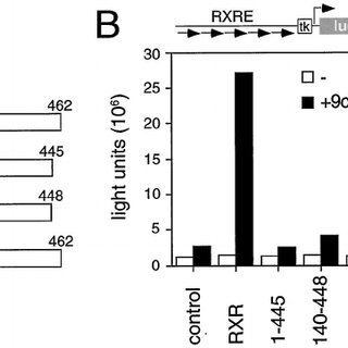 T 3 , atRA, and 9cRA Accelerate Erythroid Cell
