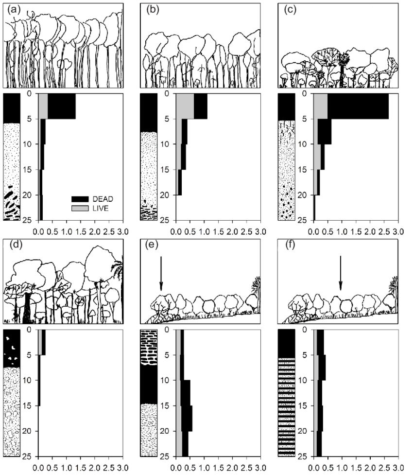 hight resolution of scheme of above ground parts of studied forest stands a submontaneous evergreen broad leaved forest sebf b submontaneus evergreen narrow leaved