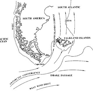 (PDF) Trophic segregation of Falkland Islands seabirds
