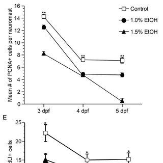 (PDF) Ethanol Affects the Development of Sensory Hair