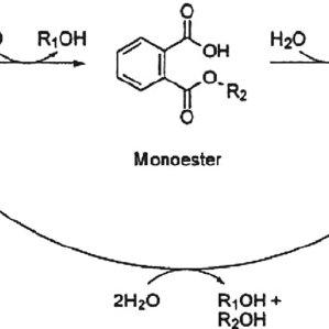 (PDF) Chemical Behavior of Phthalates Under Abiotic