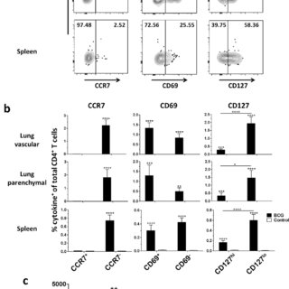 T cells and NK cells in spleens of BCG-immunized mice