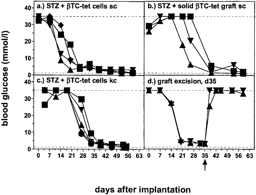 Histoincompatible TC-tet cells grow in STZ-diabetic mice