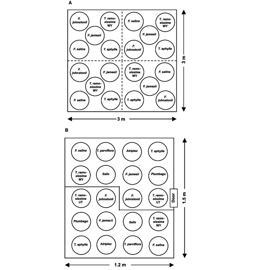 Plot diagram for D. e. deserticola multiple-choice host