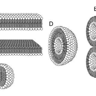 (PDF) Primitive Membrane Formation, Characteristics and