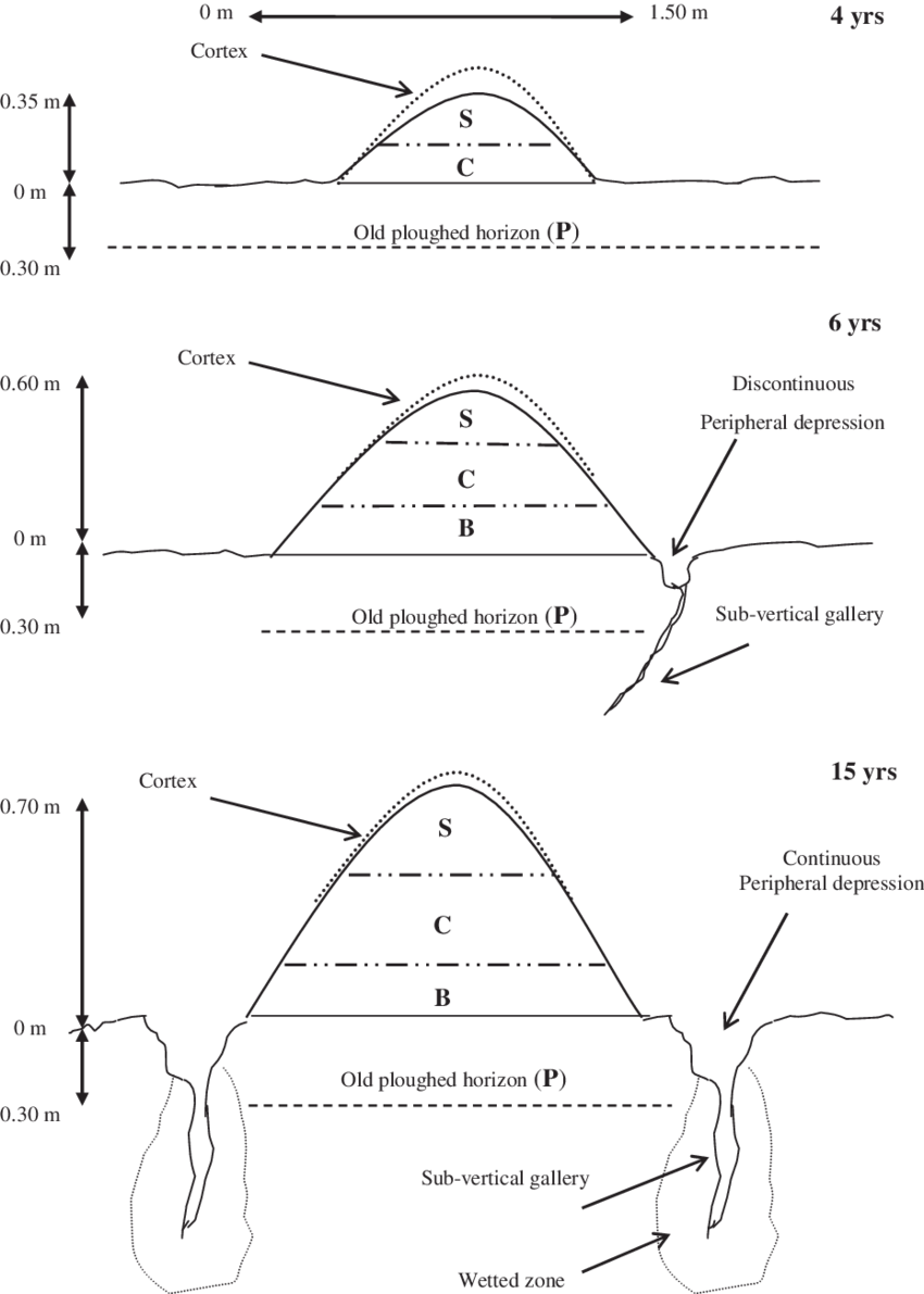 Scheme of the internal organization of the 4, 6 and 15