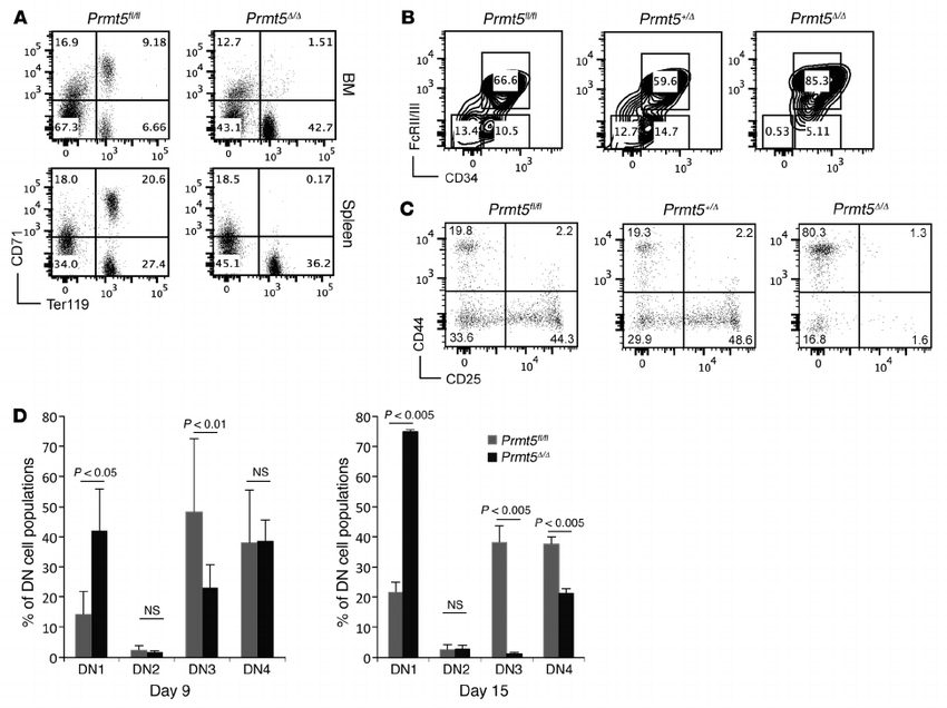 PRMT5 loss impairs erythroid differentiation and T cell